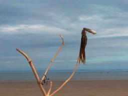 oxwich seabird
