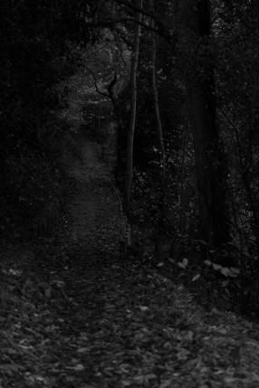 woodland walk b and w