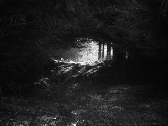 llaneglys forest