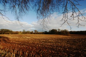 winter fields 5
