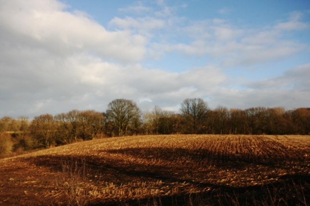 winter fields 6