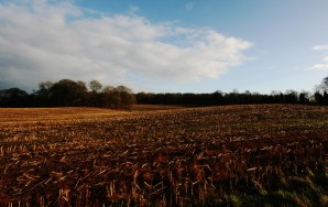 winter fields 9